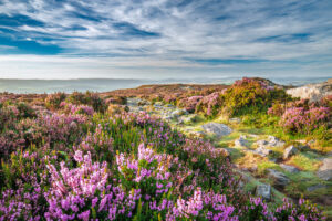Upland heather moorland