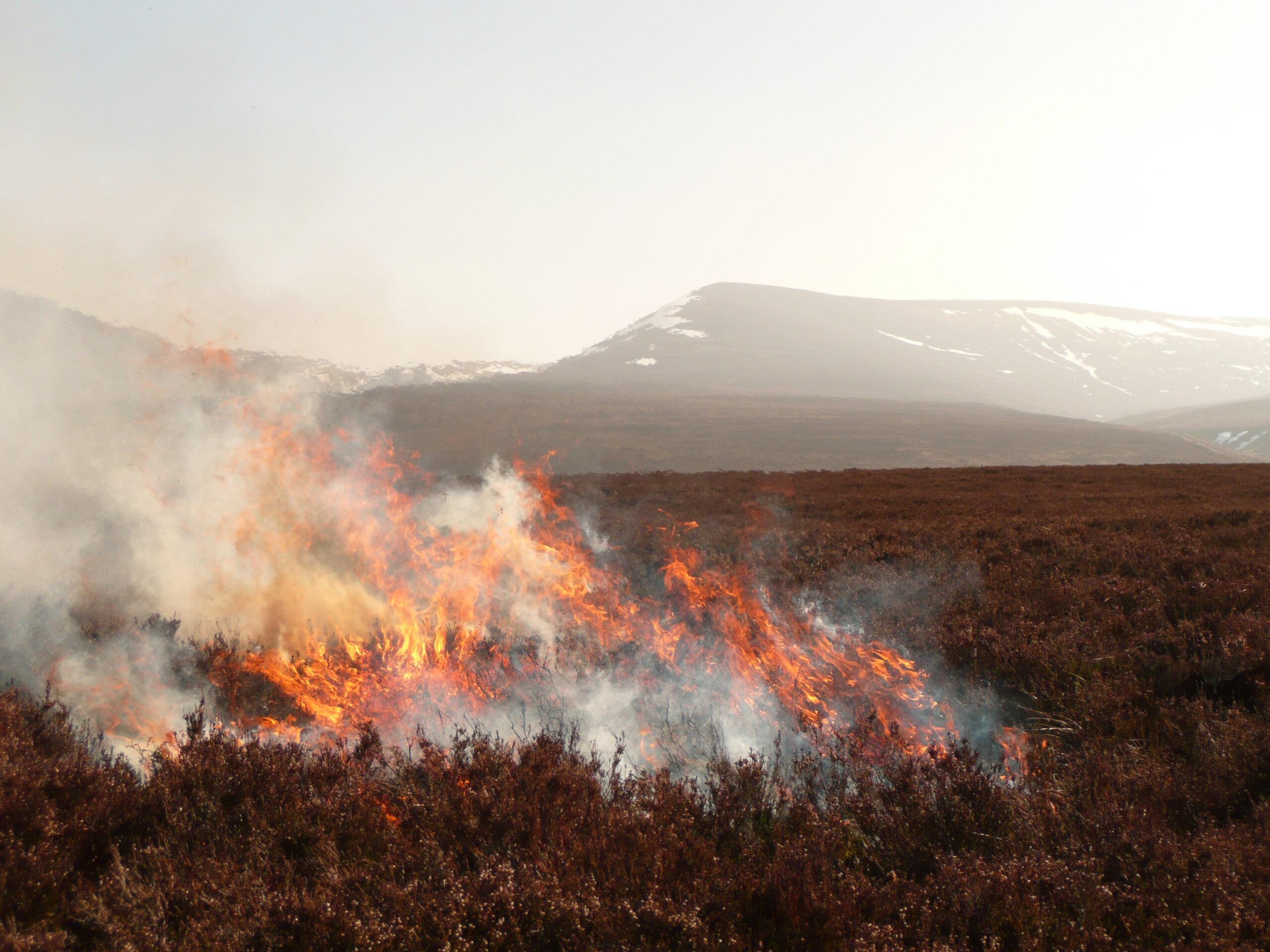 Controlled heather burn